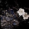 Photos: 夜の二輪
