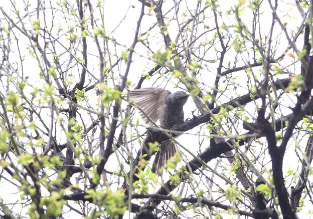 写真: 梅の木で