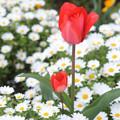 写真: 隅田川の小さな花壇で
