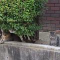 路地猫の食卓