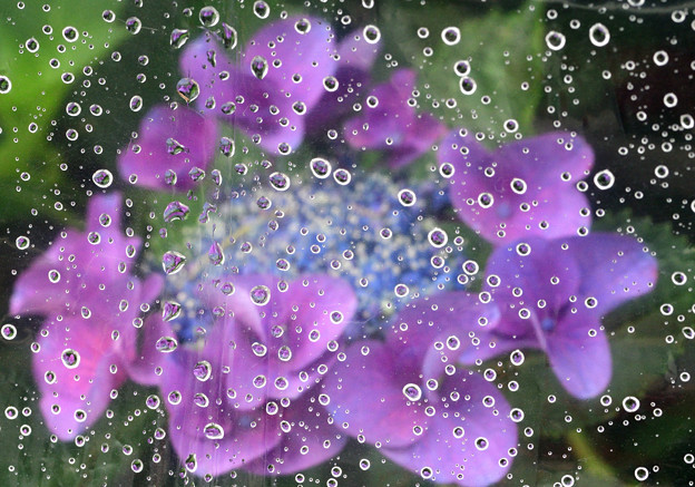 雨の日は傘で