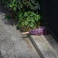 写真: 置き傘
