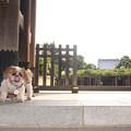 Photos: 善養寺でベロンチョ