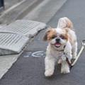 写真: お散歩~♪