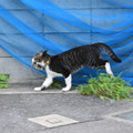Photos: 捕ったど~♪