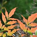 写真: 秋色グラデ
