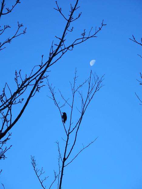 月とヒヨちゃん