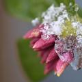 写真: 春よ、来い