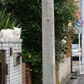 Photos: 塀の上のシロちゃん