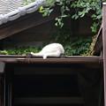 Photos: シロちゃん