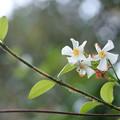 Photos: 白いお花