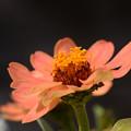 Photos: オレンジ色の