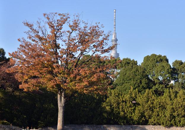 紅葉とスカイツリー