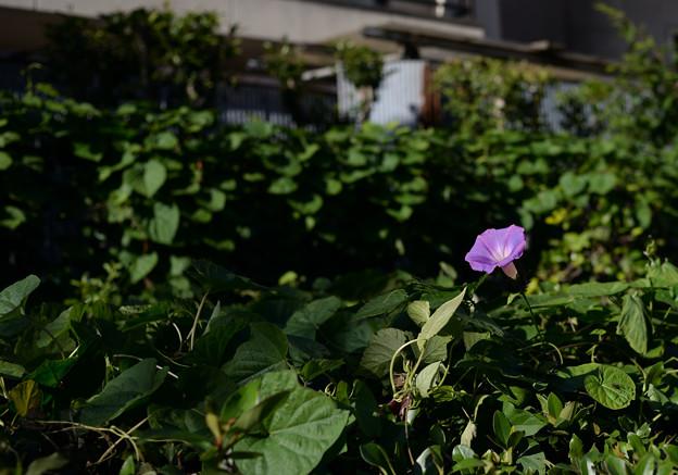 Photos: 豊洲から築地へ