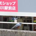 Photos: 駅に