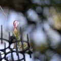 Photos: 咲く