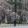 Photos: 日比谷公園の梅ちゃん