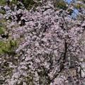 手児奈の花