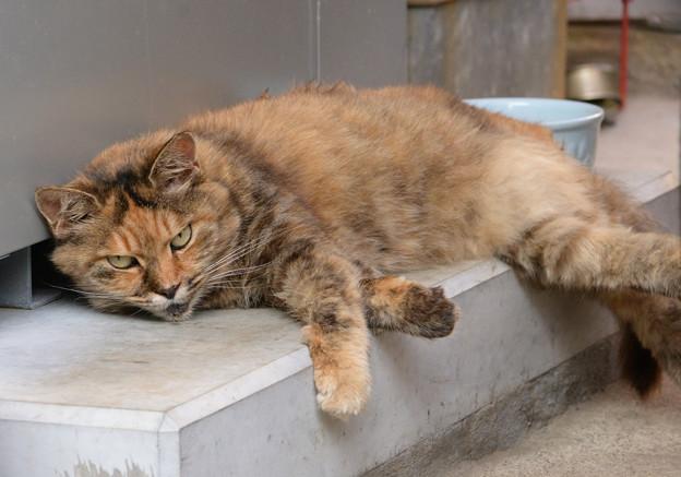 猫も暑いニャン
