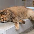 Photos: 猫も暑いニャン