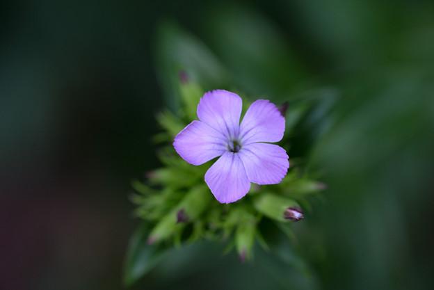 紫色のお花