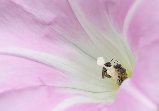 蜂さんと蜂さんが