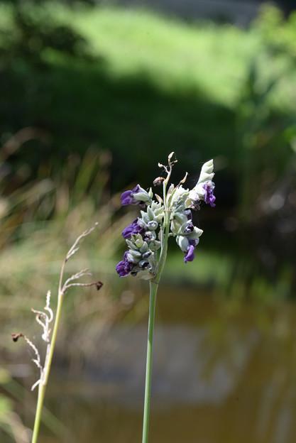 Photos: 紫色のお花