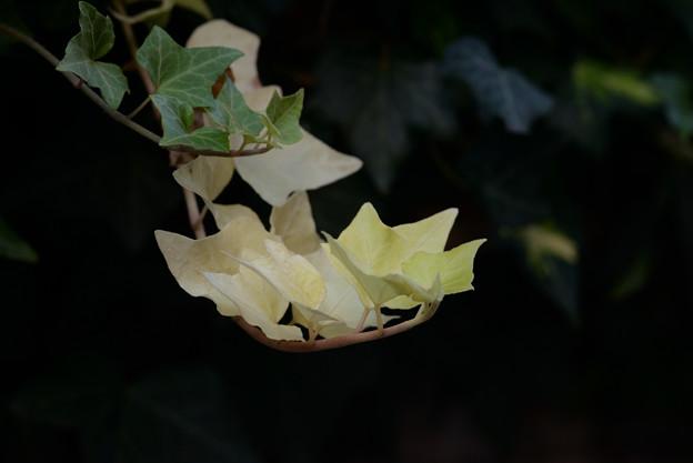 Photos: 葉