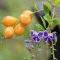 Photos: 花も実もある