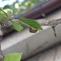 Photos: 中秋の空蝉