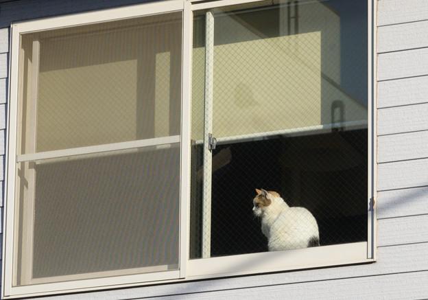 窓際の猫ちゃん