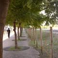 Photos: 栴檀の木の下で