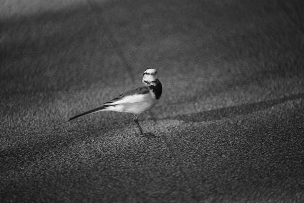 モノクロ鳥