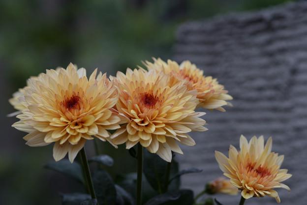 Photos: オレンジ色のお花