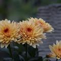 オレンジ色のお花