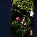 Photos: 赤色のお花