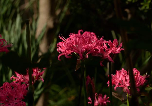 赤色のお花