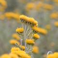Photos: 寄り添う黄色いお花