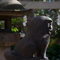 Photos: 狛犬