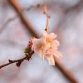 Photos: 黄昏時に