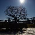 Photos: 冷たい太陽