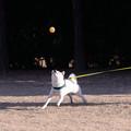 全集中 白犬の呼吸 捕ノ型
