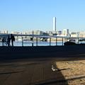 Photos: 鳩三羽