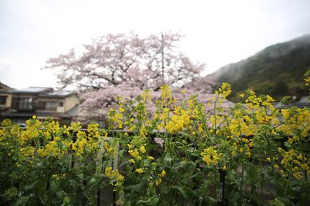 山科疎水 (4)