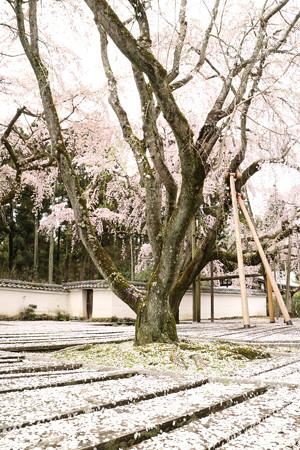 醍醐寺三宝院 (1)