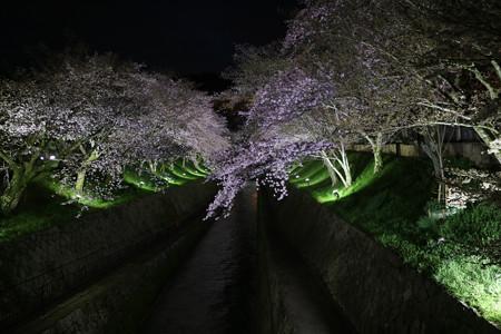琵琶湖疎水 (1)