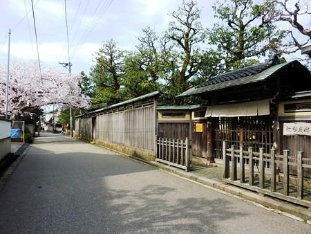 3、寺町〜犀川の桜