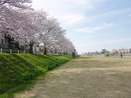 10、寺町〜犀川の桜