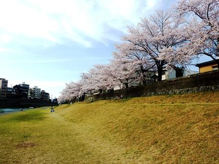 21、寺町〜犀川の桜