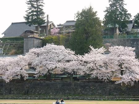 22、寺町〜犀川の桜